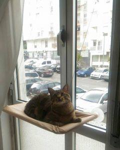 Cama de janela básica - Bege photo review