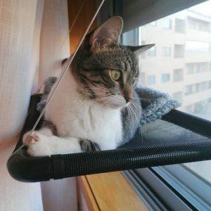 Cama de janela formato plano - Preta photo review