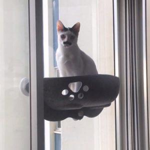 Cama de janela em feltro WindowPaw photo review