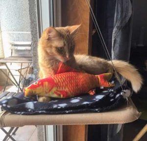 Peluche peixe com catnip photo review