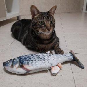 Peixe com movimento e Catnip (Recarregável por USB) photo review
